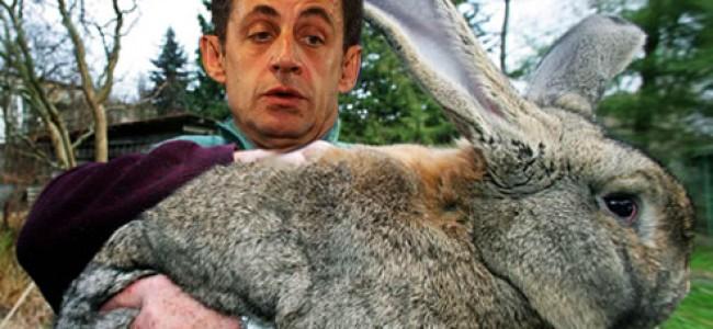 Sarkozy's Rabbit Chasing: The Wikileaks Trivia that Fascinates…