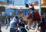 Lies, Damned Lies: Behind Egypt's Disinformation