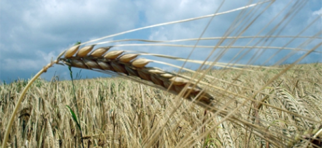 Rise in Grain Cost Will Lead to Regional Disaster