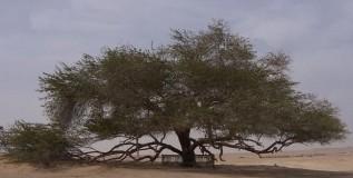'My Beautiful Bahrain': An Alternative View