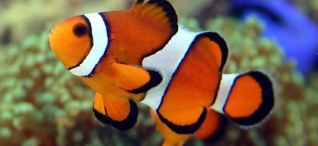 Finding Nemo in the Kingdom: Red Sea Wonder