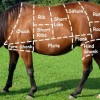 Horse Meat Furore: Time for a Trip Down Memory Lane
