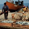 A Key Project: Morocco's Fishermen Receive Vital Aid