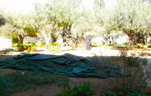 The Walled Garden of Gethsemane